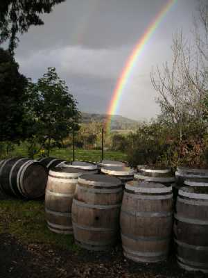 Wine Barrels at Seville Estate © Andy Tarry